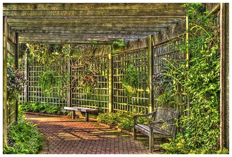"Rose Garden Arbor, ""A Left-Eyed View"""