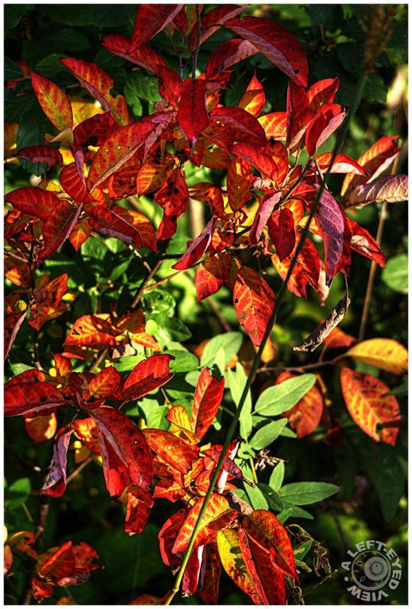 Fall colors, leaves, autumn colors