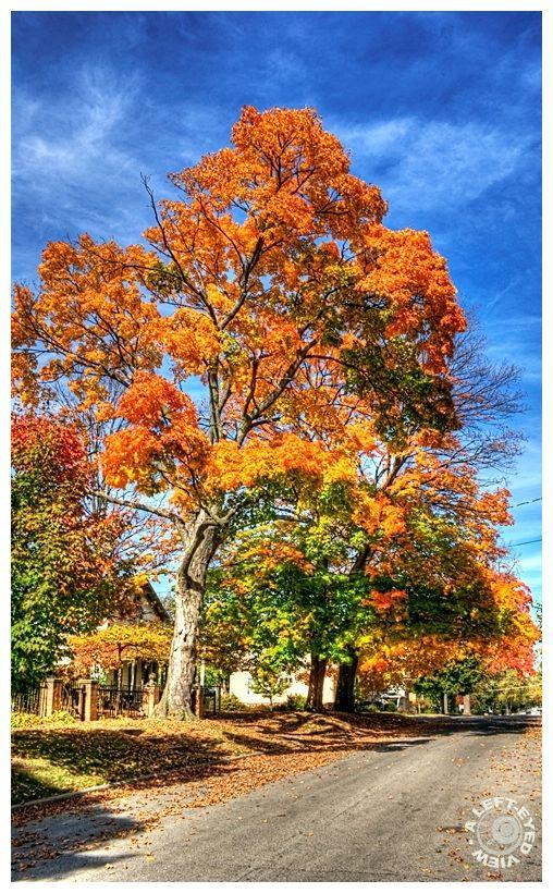 Waukegan, Autumn, Fall, Tree, leaves, color