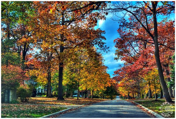 College Avenue