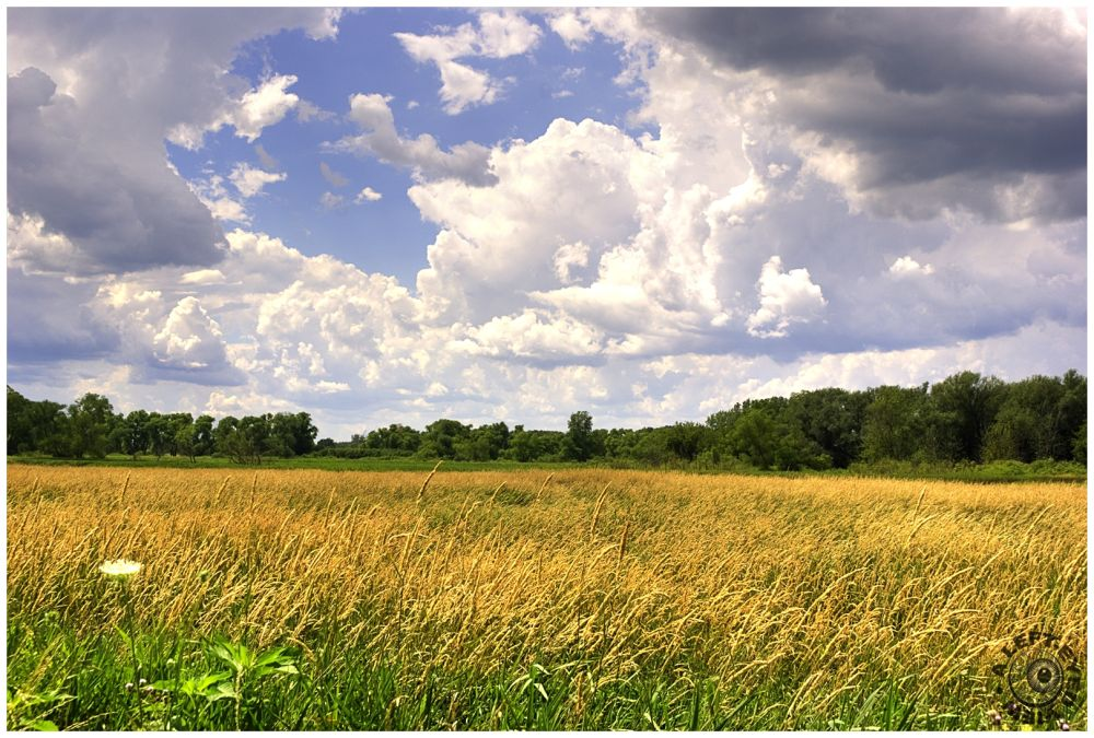 """""""Amber Fields of Grain"""", """"A Left-Eyed View"""""""