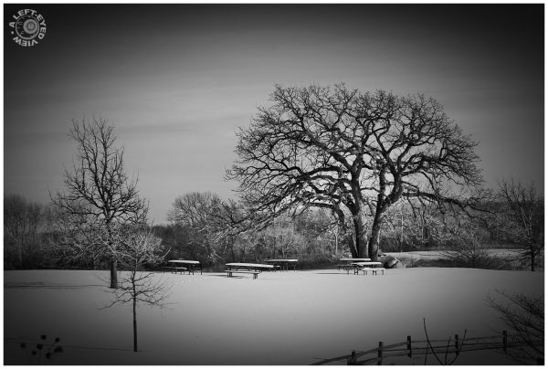 Van Patten Woods, A Left-Eyed View, blanket, snow