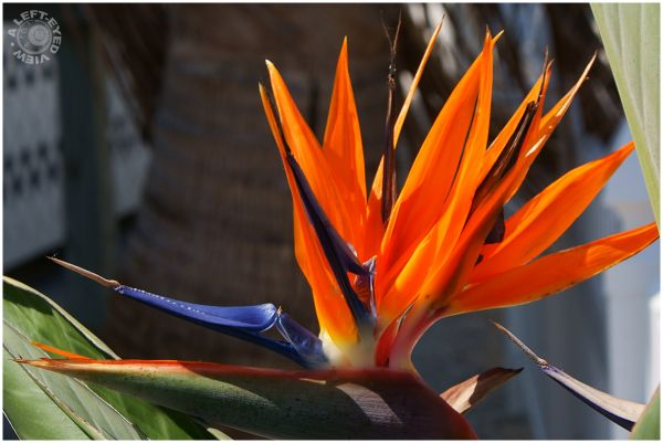 """""""Bird of Paradise"""", """"A Left-Eyed View"""""""