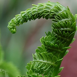 "Fern, ""A Left-Eyed View"""