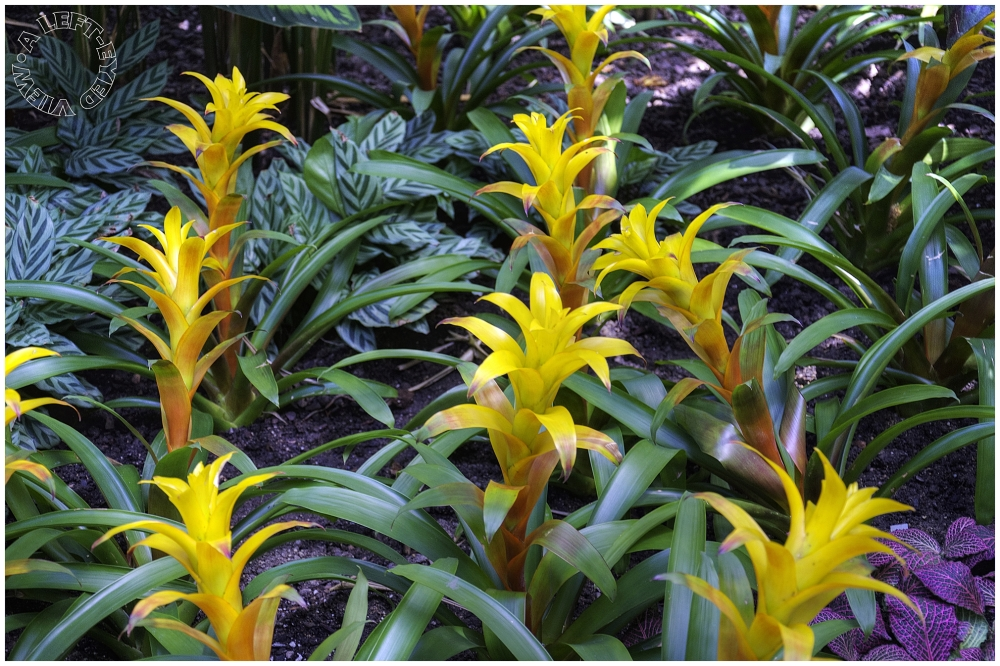 """bromeliad, """"A Left-Eyed View"""""""