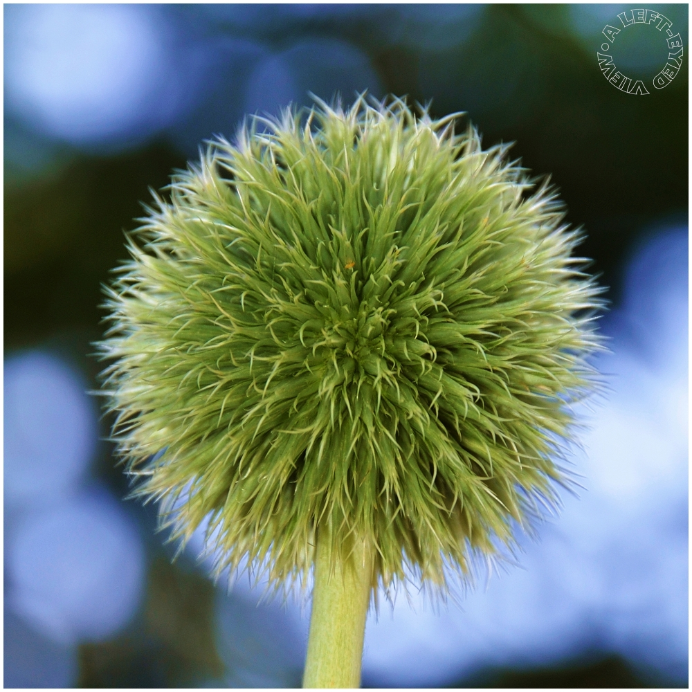 """thistle, """"A Left-Eyed View"""""""
