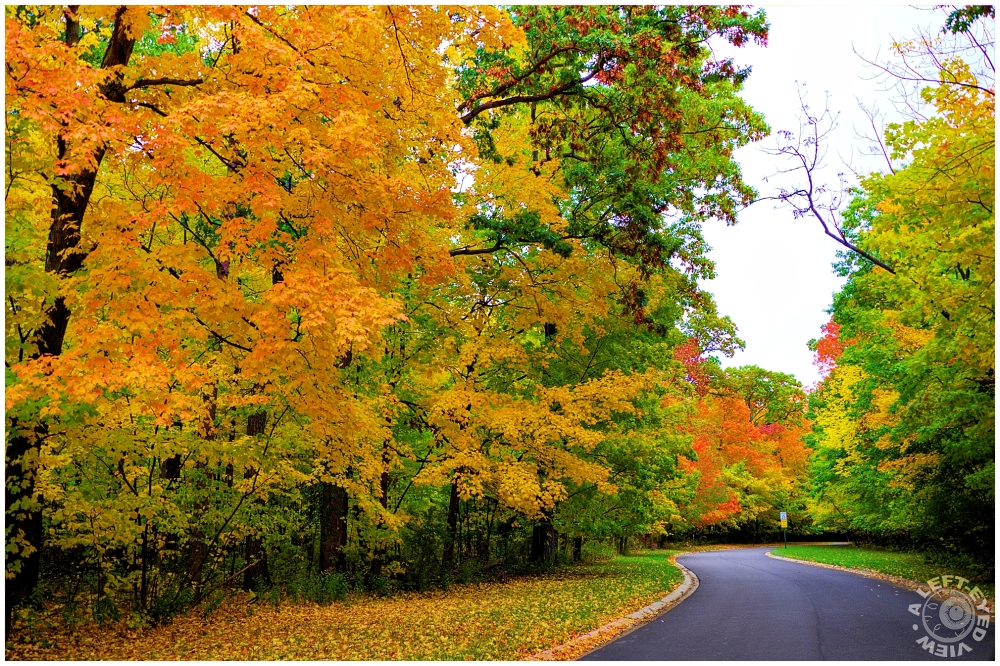 """Fall, Autumn, """"A Left-Eyed View"""""""