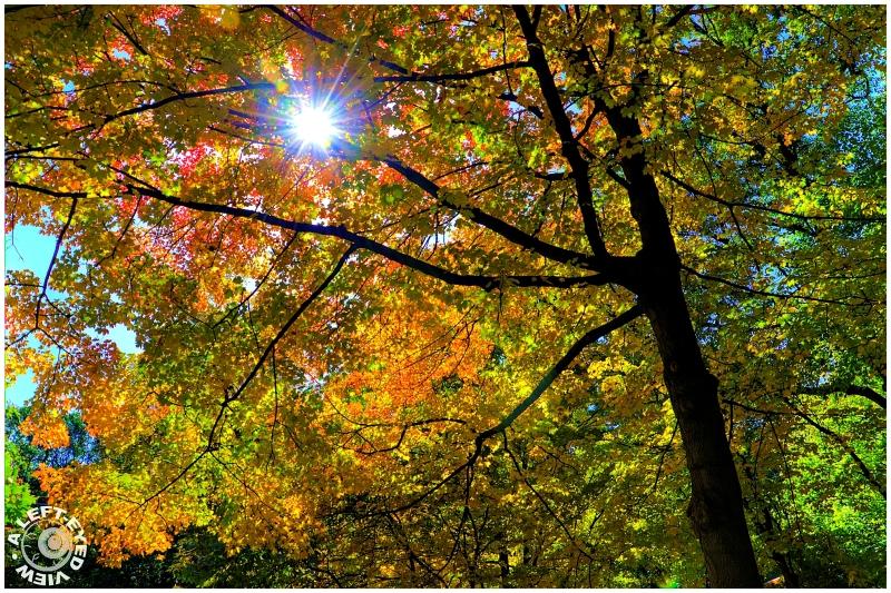 """Graue Mill"", Fall, Autumn, ""A Left-Eyed View"""