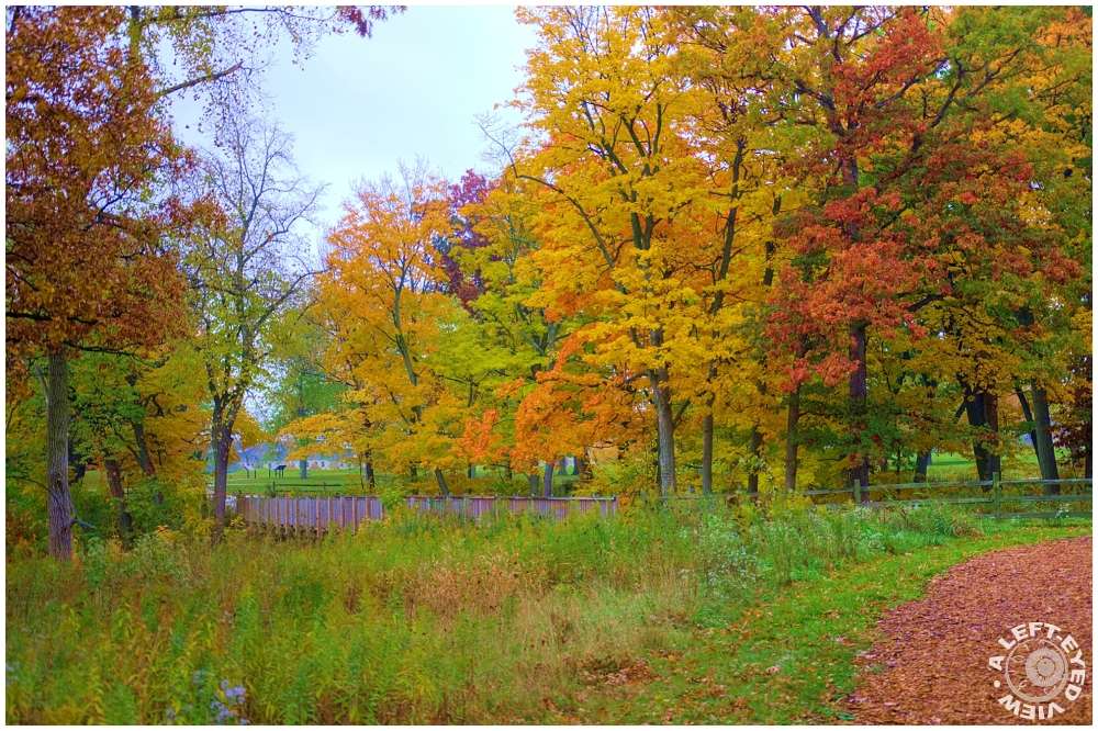 """""""A Left-Eyed View"""", Fall, Autumn"""