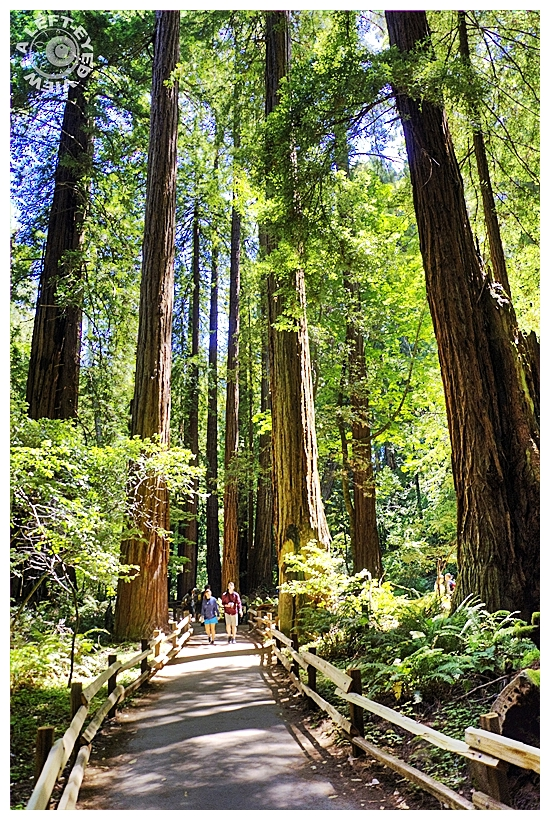 """Muir Woods"", ""A Left-Eyed View"""