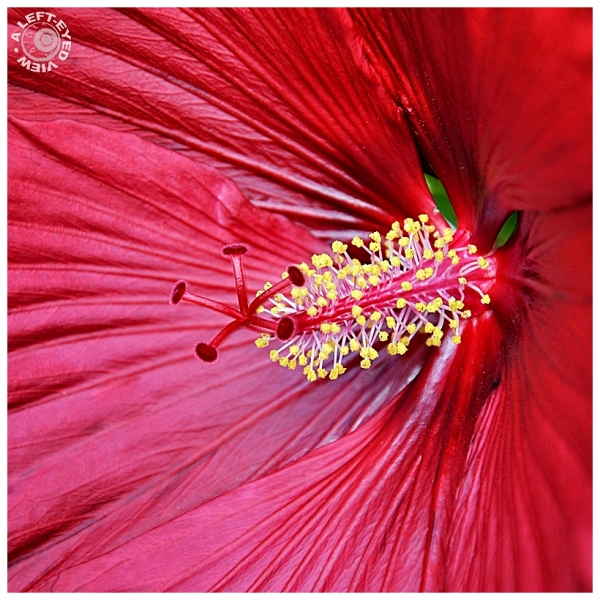 """""""A Left-Eyed View"""", """"Hibiscus"""""""