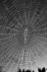 """When Spiders' Webs Unite......"