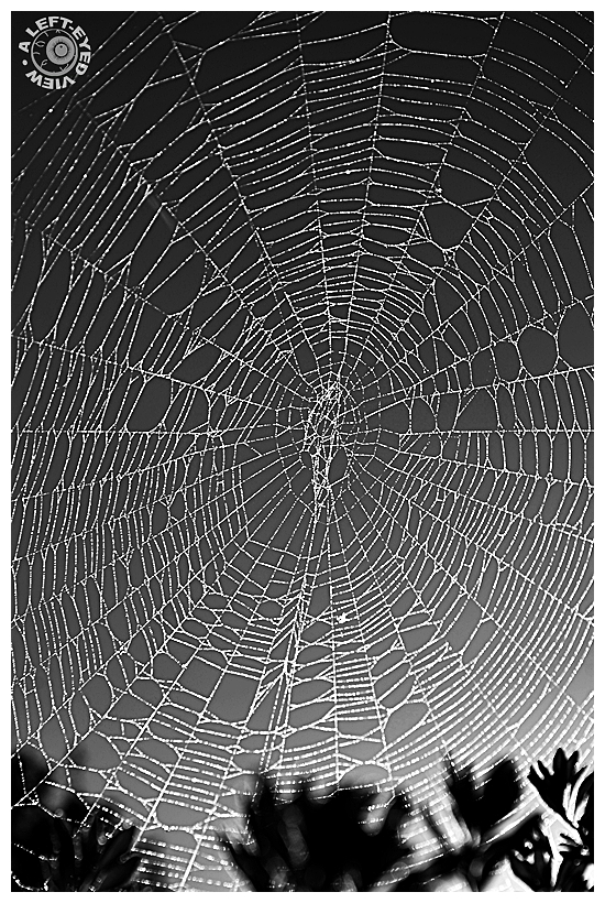 """""""A Left-Eyed View"""", """"Spider Web"""""""