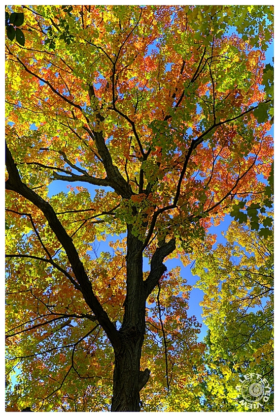 "Sabourin, Autumn, ""A Left-Eyed View"""
