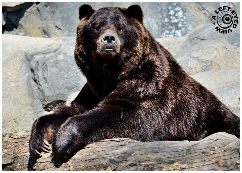 """""""A Left-Eyed View"""", """"bear"""", Sabourin"""