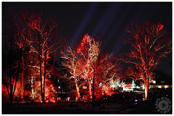 Illumination: Tree Lights at the Morton Arboretum