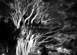 """A Left-Eyed View"", Sabourin, ""Morton Arboretum"""