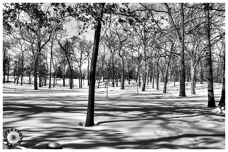 """A Left-Eyed View"", Sabourin, trees, snow, shadows"