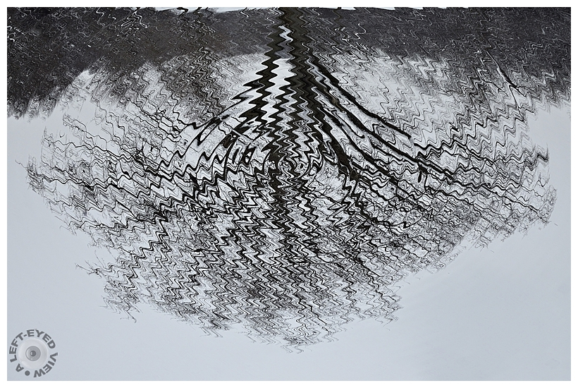"""A Left-Eyed View"", Sabourin, tree, ripples"