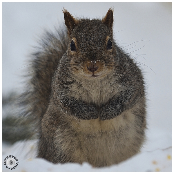 Stare Down with a Squirrel?