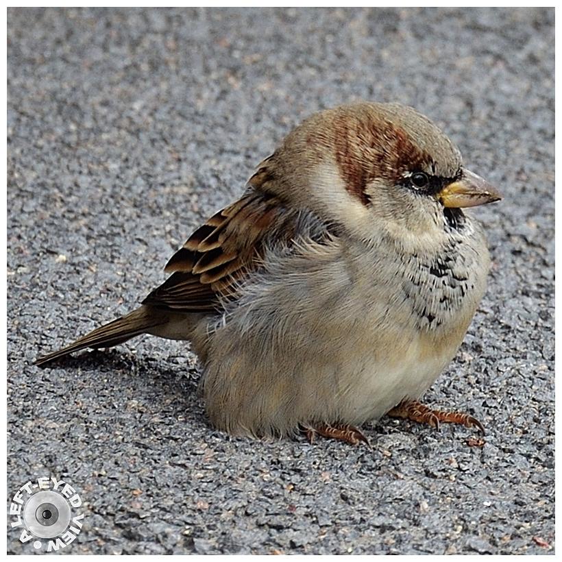 """""""A Left-Eyed View"""", Sabourin, bird"""