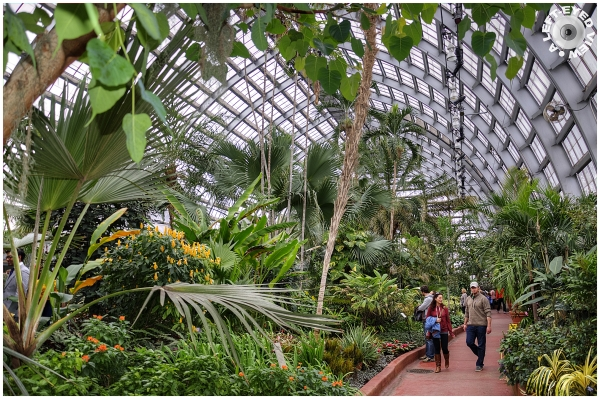 Palm House at Garfield Park Conservatory