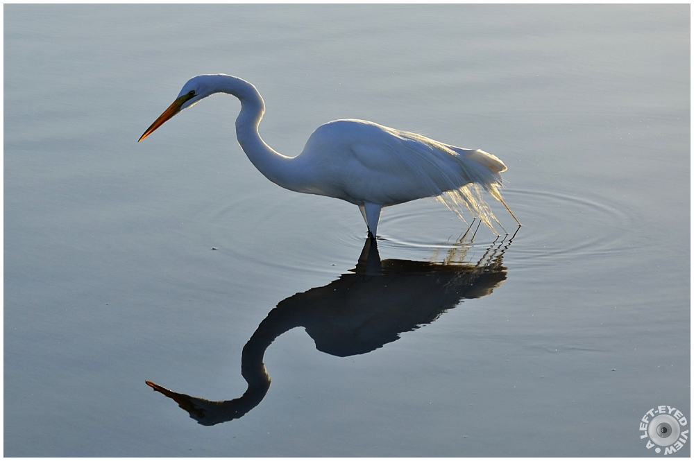 """A Left-Eyed View"", Sabourin, Egret"