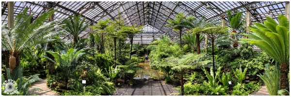 The Fern Room
