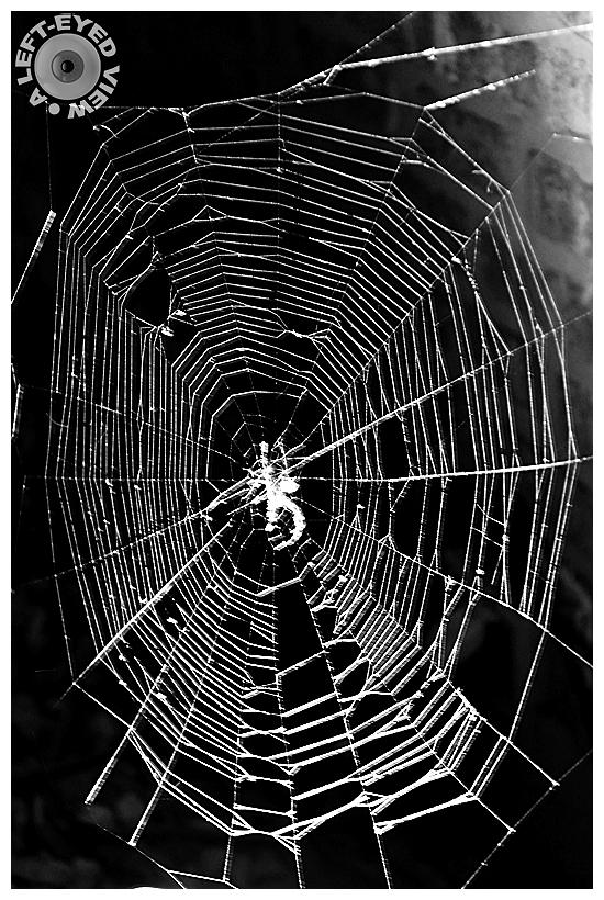 Spider Web, Sabourin