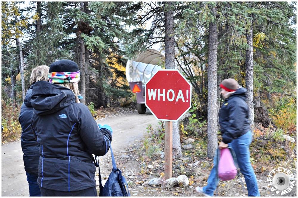Whoa Stop Sign, Sabourin