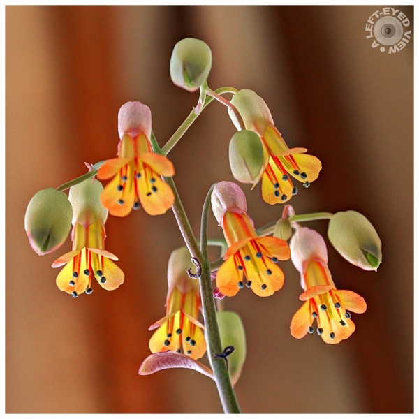 Flowers, Sabourin