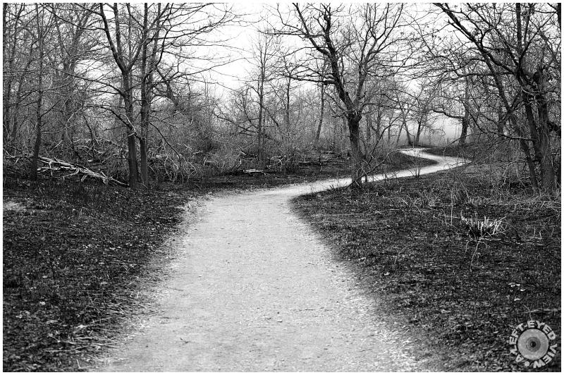 path, forest, Sabourin