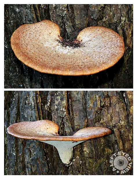 "fungus, ""Sabourin"", ""A Left-Eyed View"""