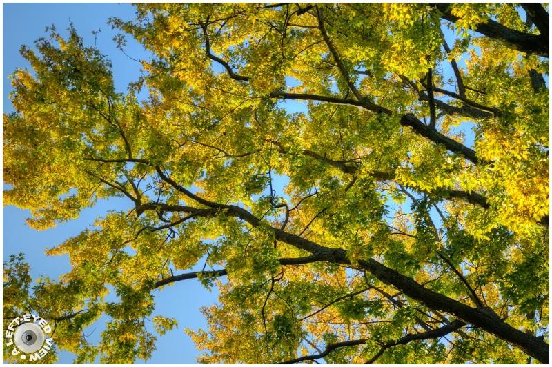 Autumnal Twilight, Sabourin