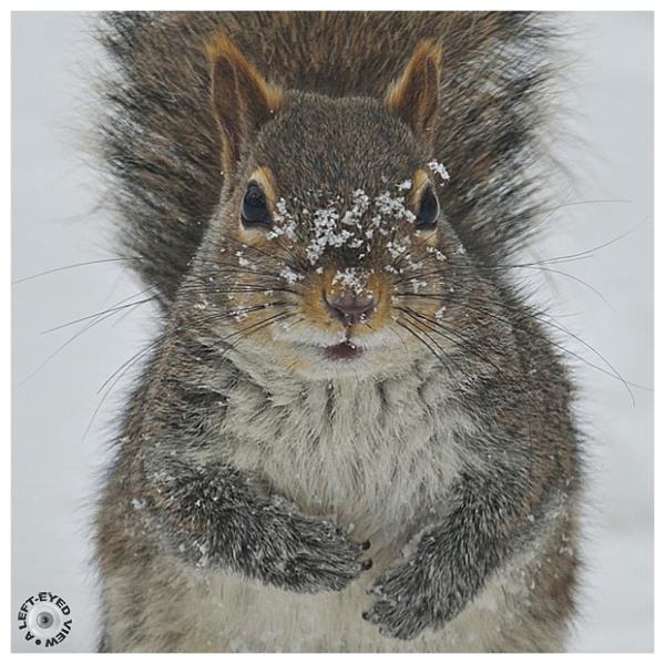 Squirreling Something Away?