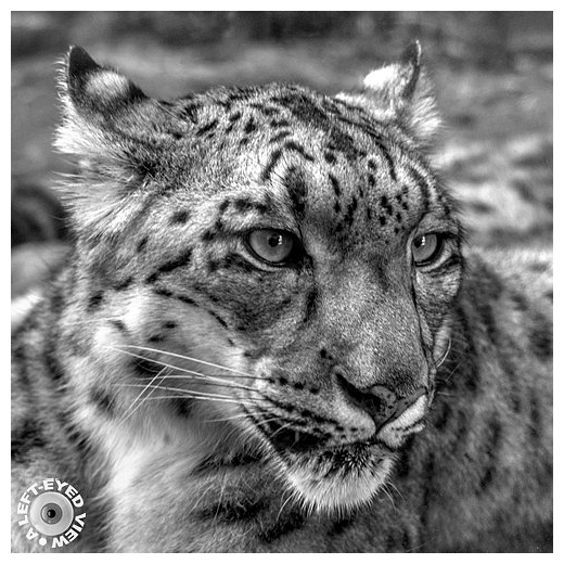 """Snow Leopard, """"A Left-Eyed View"""""""
