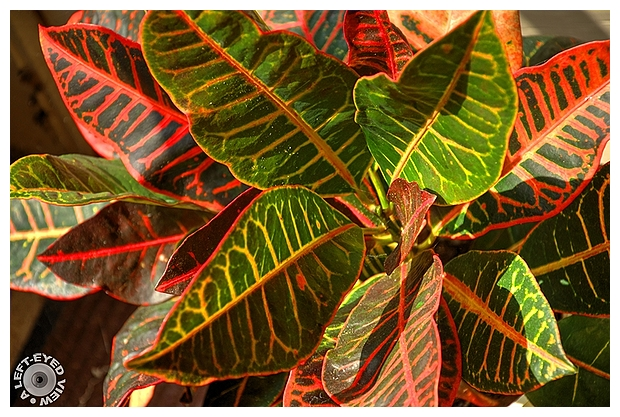 "Croton, ""A Left-Eyed View"""