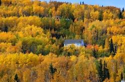 "Fall, Autumn, ""A Left-Eyed View"", Fairbanks"