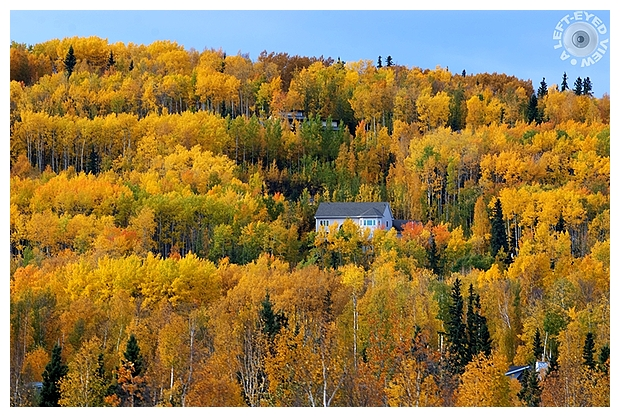 "Fall, Autumn, ""A Left-Eyed View"", Fairbanks"