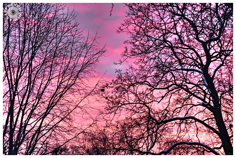 """Trees, Sunrise, """"A Left-Eyed View"""""""