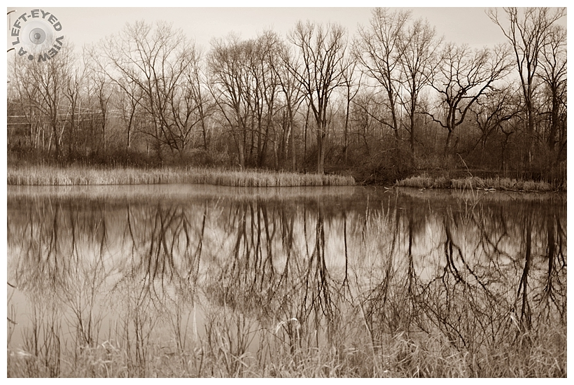 """Reflection, """"A Left-Eyed View"""", Sabourin"""