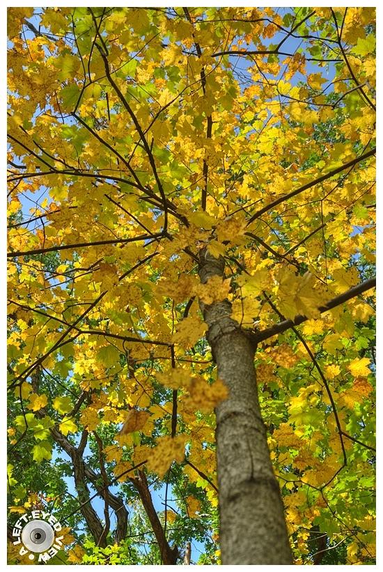 """A Left-Eyed View"", Sabourin, Autumn"
