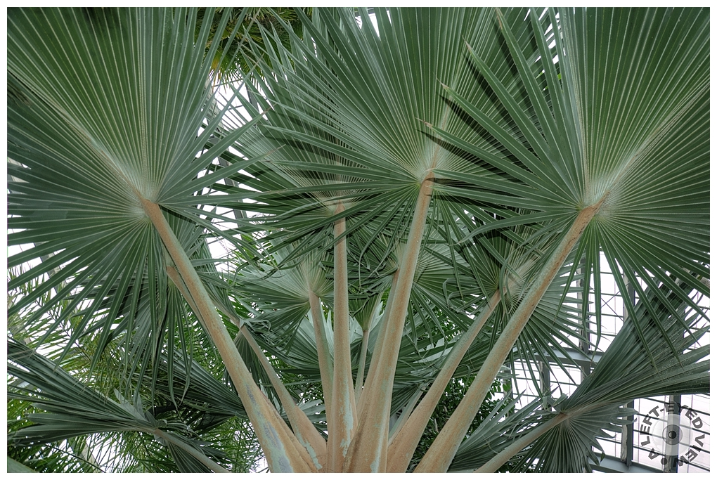 """A Left-Eyed View"", Sabourin, ""Cabbage Palm"""