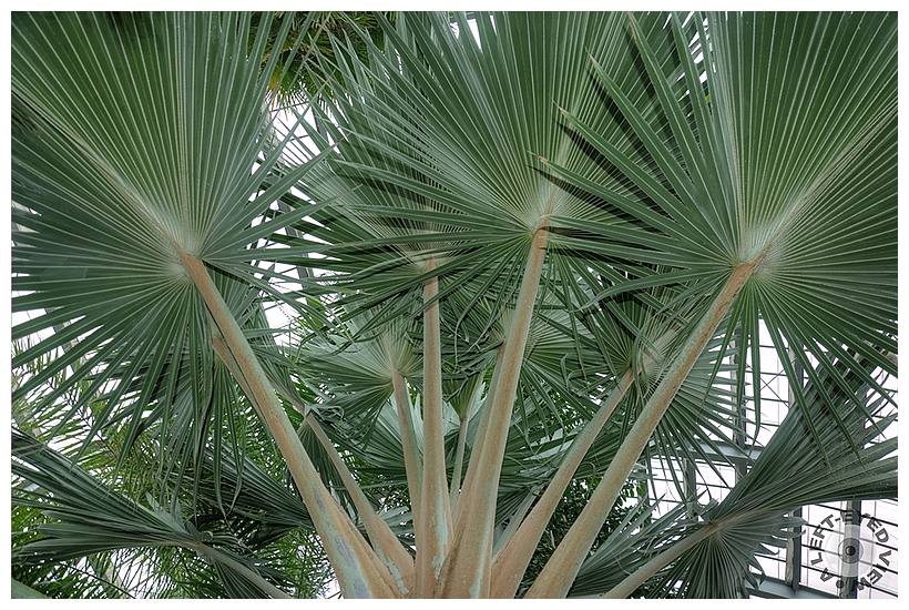 """""""A Left-Eyed View"""", Sabourin, """"Cabbage Palm"""""""