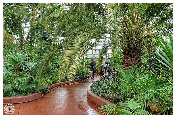 Walking through the Palm House 2
