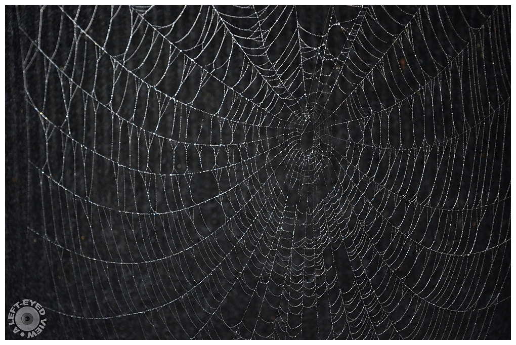"""A Left-Eyed View"", Sabourin, Spider Web"