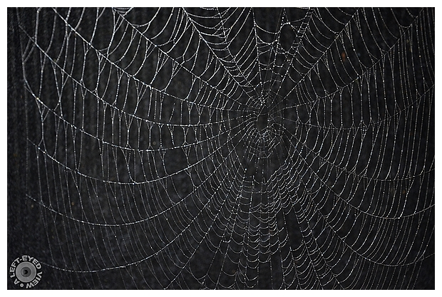 """""""A Left-Eyed View"""", Sabourin, Spider Web"""