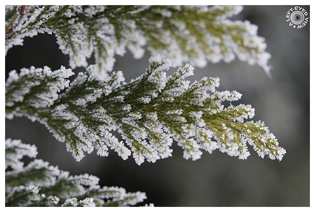 """Winter knits her forest with frost, . . ."