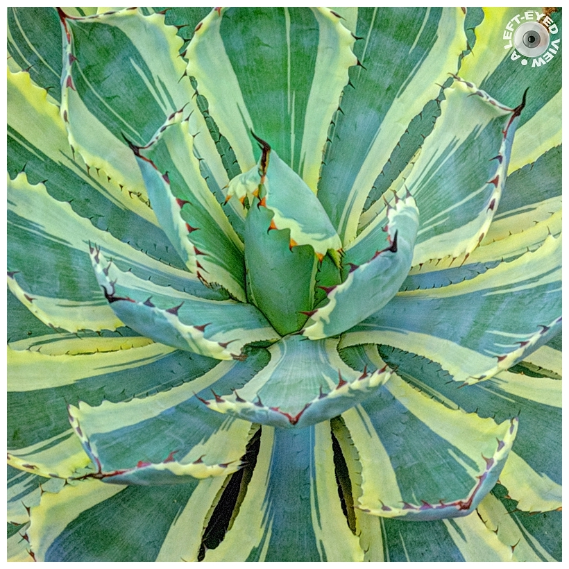"""A Left-Eyed View"", Sabourin, Butterfly Agave"