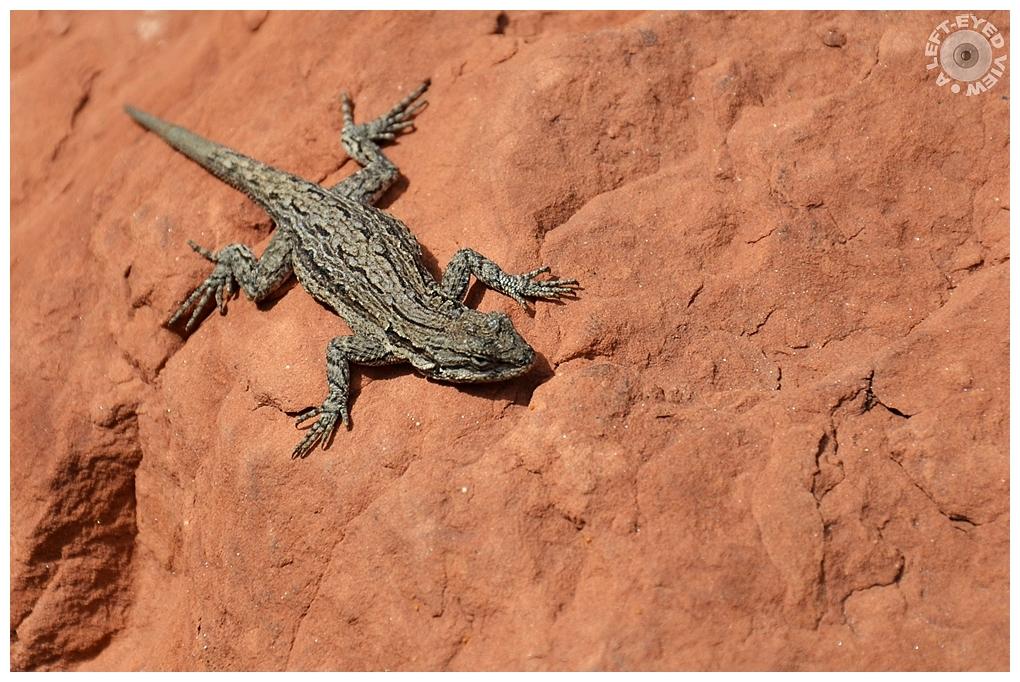 """""""A Left-Eyed View"""", Sabourin, Lizard"""
